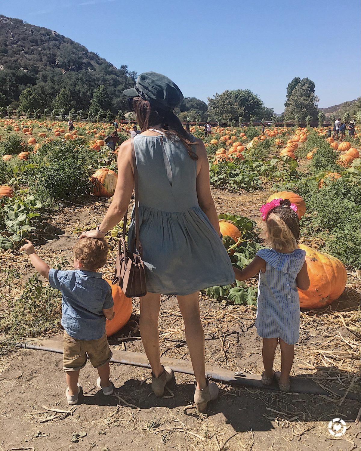 blogger and kids pumpkin patch
